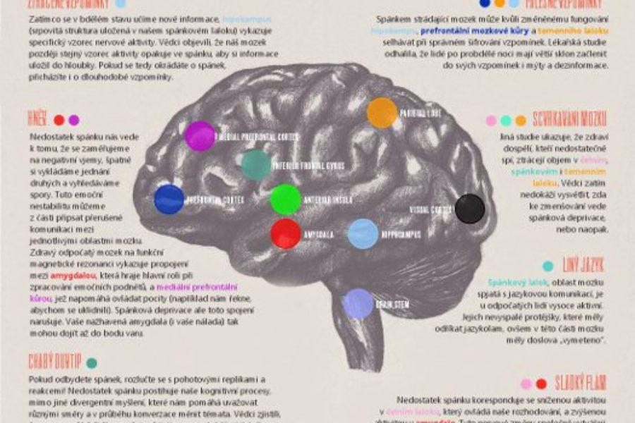 Co se děje, když náš mozek nespí?